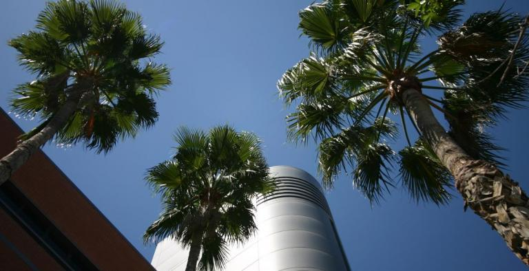 Image of building with palm trees